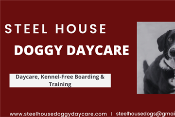 Steel House Doggy Daycare
